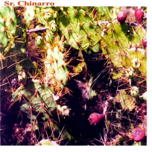 portada del album Sr. Chinarro
