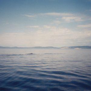 portada del disco Dolphins in Love