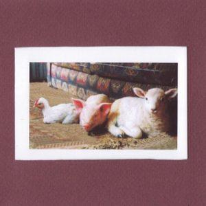 portada del disco Apenino & Árbore: Animals Are Not Things!